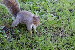 An Inquisitive Squirel