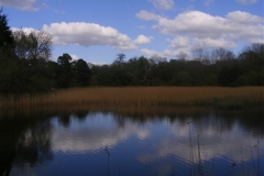 Lake in Emo Court, Co. Laois
