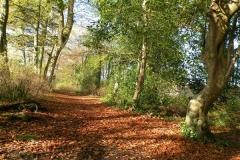 Forest walk around Drewstown House