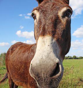 A Donkey in a Field